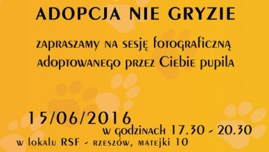 plakat sesja kocia2016-06fb